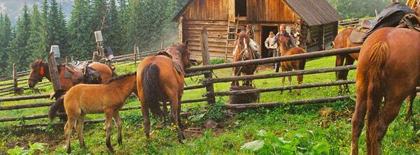 horse riding trip ukraine carpathians three days