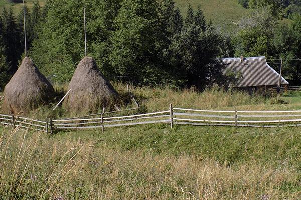 hay-carpathians-ukraine