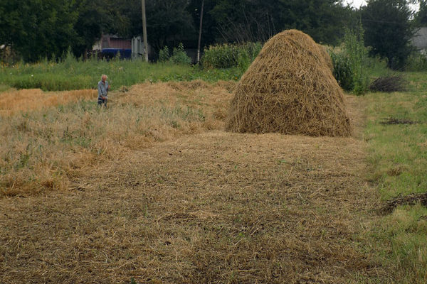 hay-making-ukraine-rural-village