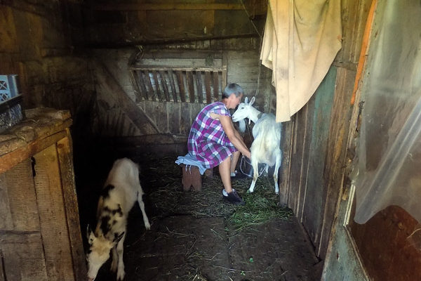 woman-milking-goat-ukraine