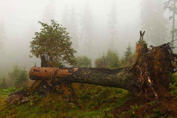 untouched Carpathian Mountains