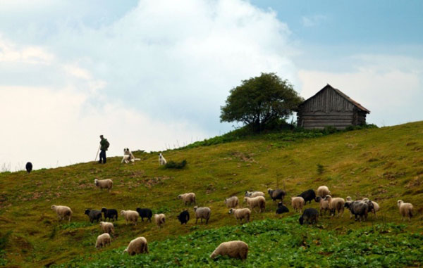 traditional carpathian dairy farm polonyna